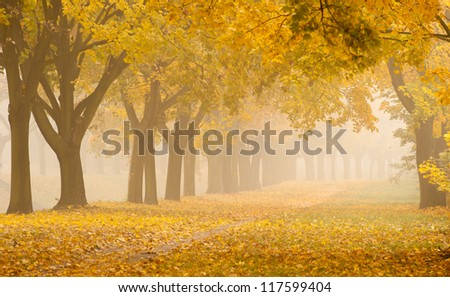 foggy romantic alley in a park - stock photo