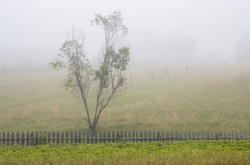 Foggy rural landscape. Scenic view of the old wooden fence, tree, vegetable garden and pastures in the fog. Misty morning in the countryside. Summer in the village.