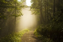 Foggy sherwood. Sun trough the trees. Path in the forest. Monte miaron, strada militare per i forti