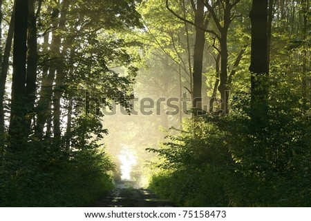 Foggy spring morning in the leafy woods highlighted by the rays of the sun.