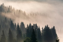 Foggy sunrise in a mountain forest. Beautiful Autumn Landscape.