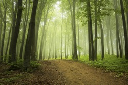Foggy trail in the forest