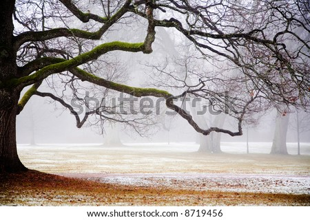 Foggy weather in early winter