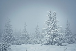 Foggy weather in Tatra Mountains, Poland. Winter wonderland in Zakopane region. Wintry landscape of cold season. Selective focus on the tree branches, blurred background.