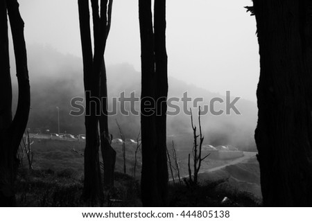 foggy weather with trees #444805138