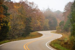Foggy Winding Road