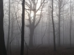 foggy winter afternoon sideling hill wildlife management area, WV