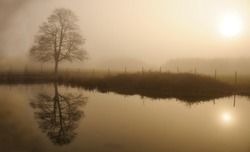 Foggy winter day in a park with lone tree reflecting in a water. Sepia toned image.