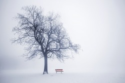 Foggy winter scene with leafless tree and red park bench in fog