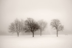 Foggy winter scene with leafless trees in sepia