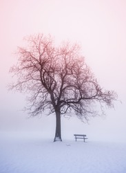Foggy winter sunrise scene with leafless tree and park bench