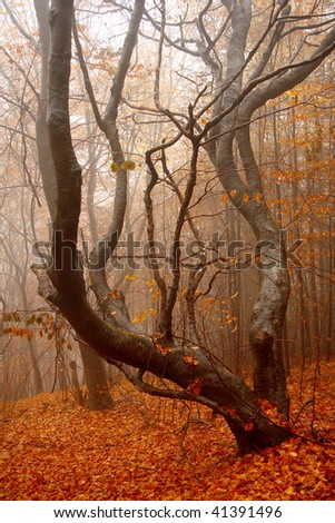 fogy autumn forest