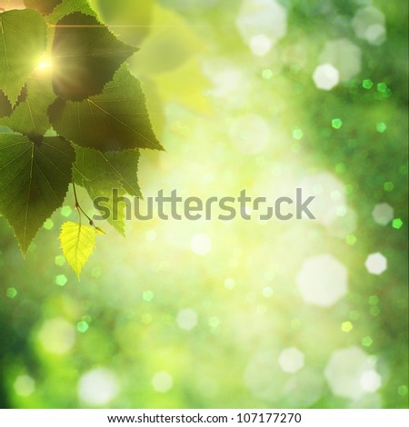 Foliage. Abstract natural backgrounds with lens flare and beauty bikeh