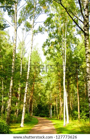 Foliage Beauty Forest View