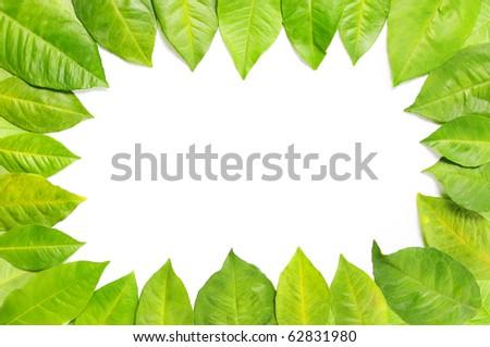 Foliage Frame - stock photo