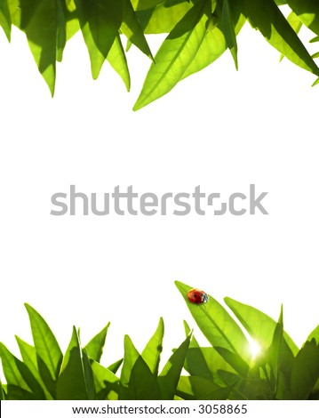 Foliage frame with orange-tree leafs and ladybug
