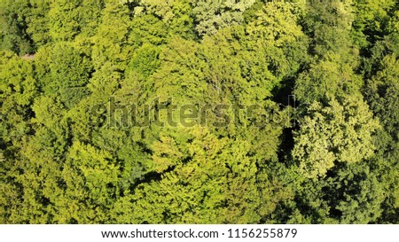 Foliage from the height. Foliage. Green. #1156255879