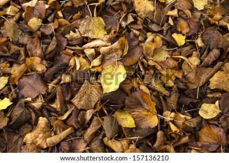 Foliage in fall, Seasonal Background