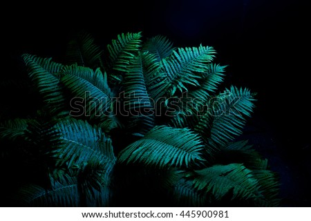 Foliage in the dark of night. Fern.