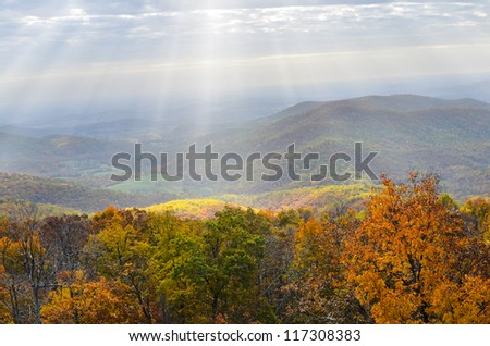 Foliage of autumn forest in Shenandoah Valley in Virginia, United States