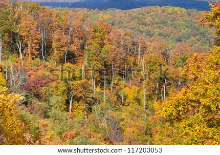 Foliage of autumn forest in Shenandoah valley, Virginia United States