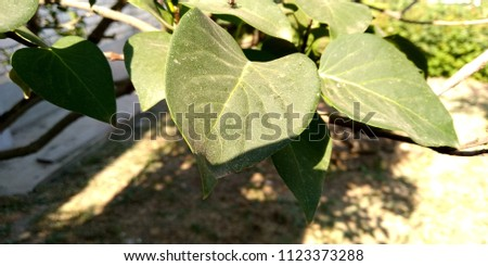 foliage, summer foliage, foliage of grapes #1123373288