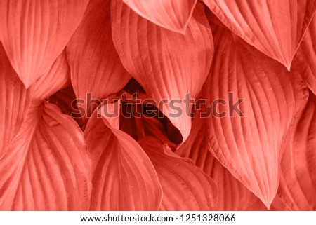 Foliage with main trendy Living Coral color of the year 2019. Colorful concept. #1251328066