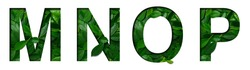 Font leafs M,N,O,P made of Real alive leafs with Precious paper cut shape. Leafs fonts collection set.