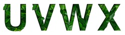Font leafs U,V,W,X made of Real alive leafs with Precious paper cut shape. Leafs fonts collection set.