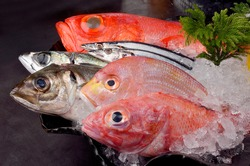 Food and  assorted japanese fresh fishes on ice.Kinmedai, japanese fresh whole red snapper.Sanma, raw pacific saury