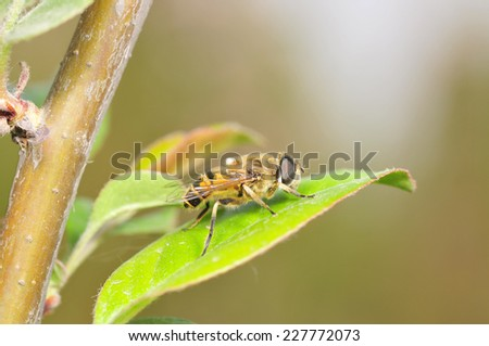 Food aphid fly on the stems of the plant