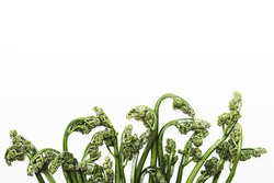 Food background. Fern bracken, ingredient for various dishes. Minimalism style. Vegan or healthy eating concept.