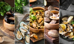 Food collage of photos of shellfish. Photos of shellfish collected in a collage. Banner