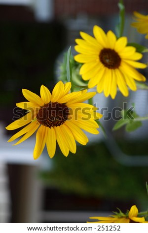 food drink product still life plate object flowers sunflowers