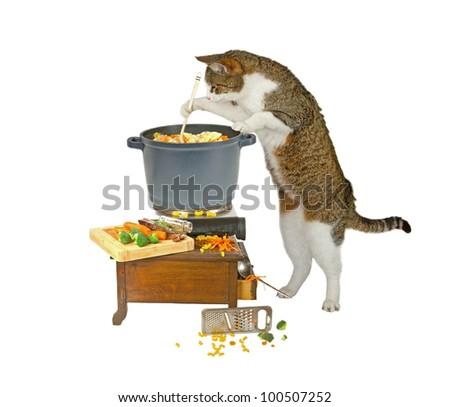 Bengal cats eating habits
