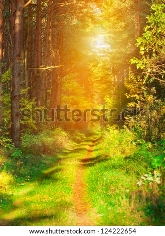 Foot path in the forest