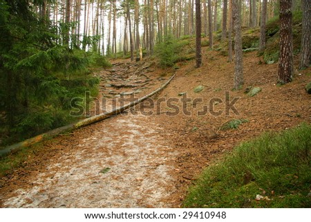 Foot path through the forest