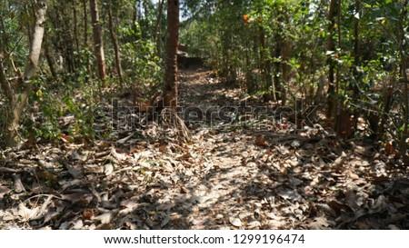 foot path, village path, walking ways #1299196474