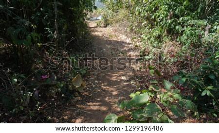 foot path, village path, walking ways #1299196486