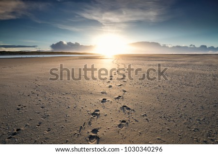 foot tracks to sunshine on horizon, Texel #1030340296