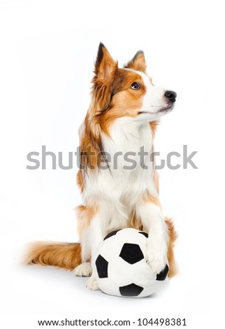 football dog isolated on white