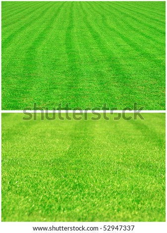 football grass background - stock photo