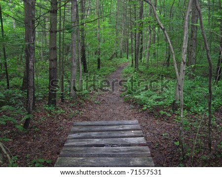 Footbridge along the Appalachian Trail
