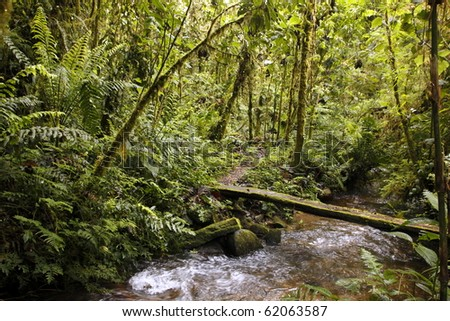 Footbridge over a stream in a cloudforest reserve in the Ecuadorian Andes