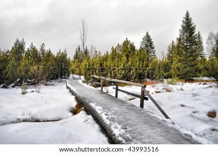 Footbridge through forest in winter - stock photo