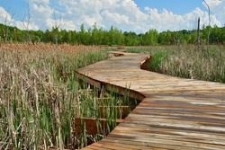 Footbridge through wetland,  Curvy Wooden Board walk across marshland after rain during sunny spring day