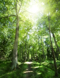 footpath between trees in green dark forest