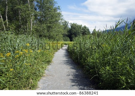Footpath going through reeds and flower in the protected area of  Doussard, Annecy, France