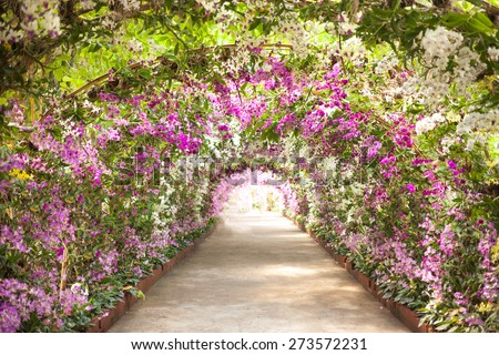 footpath in a botanical garden with orchids lining the path.