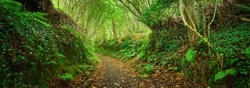 Footpath in a green oak tree forest in Brittany, France. Natural tunnel. Breathtaking panoramic view. Atmospheric landscape. Travel destinations, eco tourism, pure nature, environmental conservation